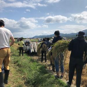 稲刈り④L